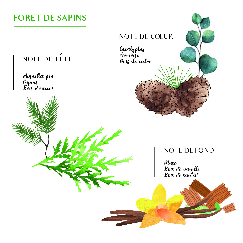 FORET DE SAPIN