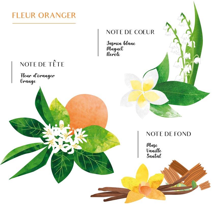 Pyramide olfactive Fleur d'oranger