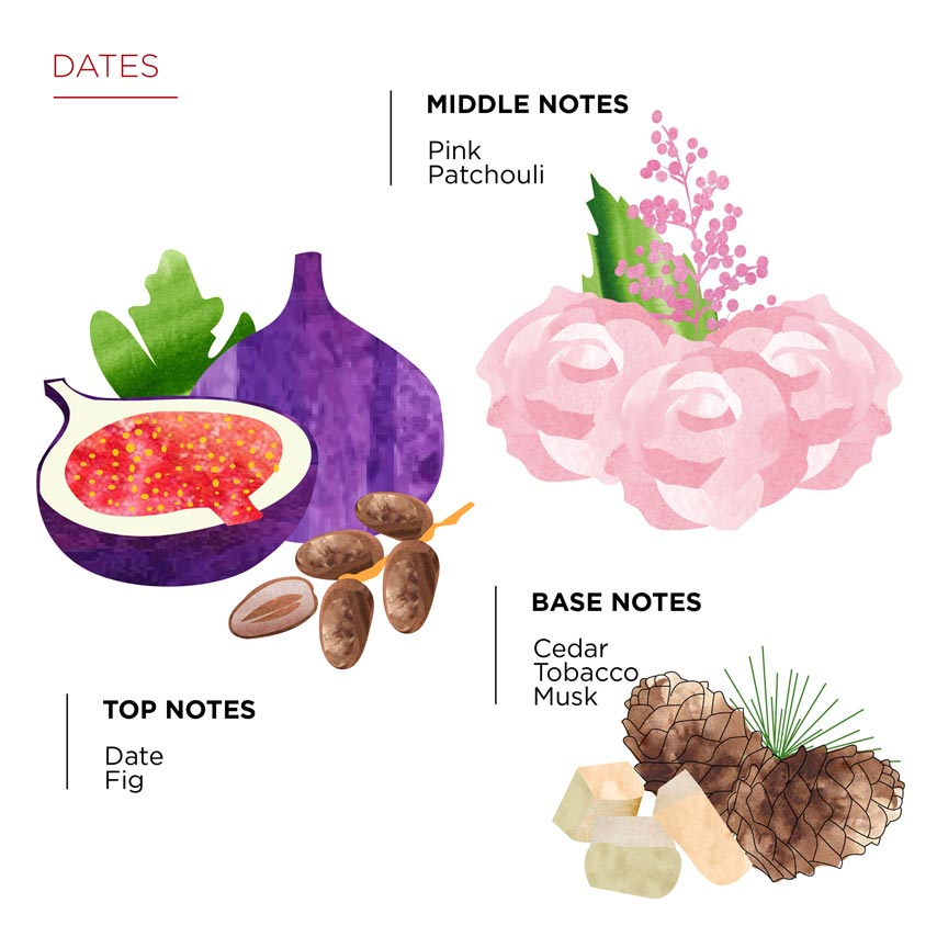 Olfactory pyramid Dates
