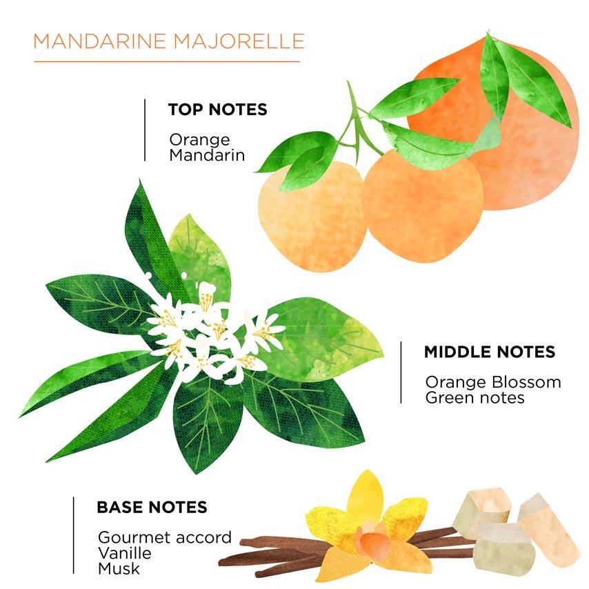 Olfactory pyramid Mandarine Majorelle