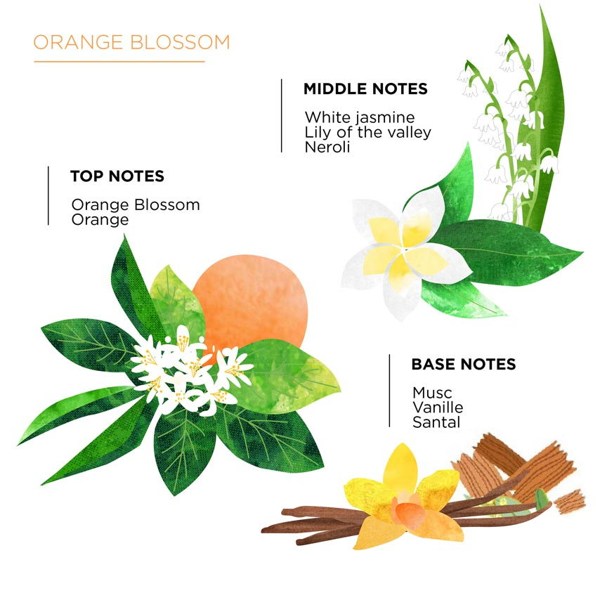 Olfactory pyramid Orange Blossom